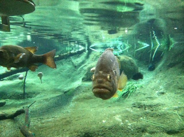 fishyMichelleBrownGarcia