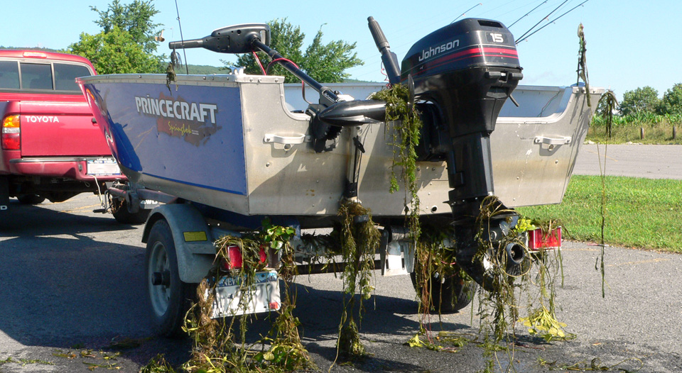 Clean your boat!