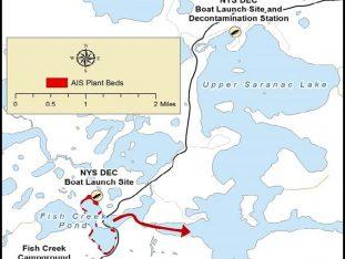 Fish Creek Aquatic Invasive Species Management