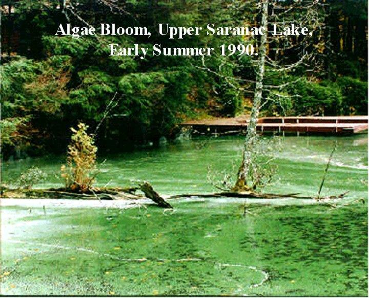 USL Algae