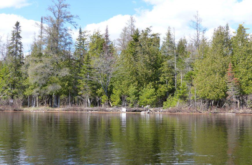 Community group opposes wetland development